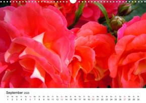 Wandkalender Rosenblüten 2021 DIN A4 Querformat